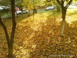 Жёлтые листья осени
