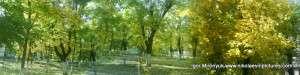 Осень. Лента-фотография в режиме Панорама