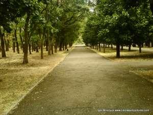 Парк Победы изнутри: центральная аллея
