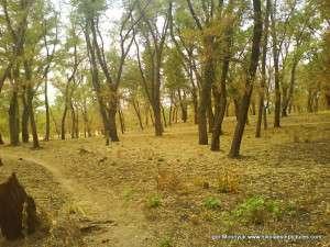 Парк Победы, напоминает Осенний лес.