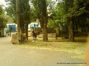 Парк Победы: жеребец возле ранчо