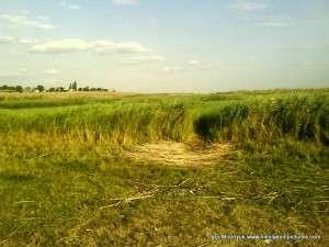 Камыши как неотъемлемая часть украинской природы.