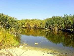 Камыши и протекающая внутри река