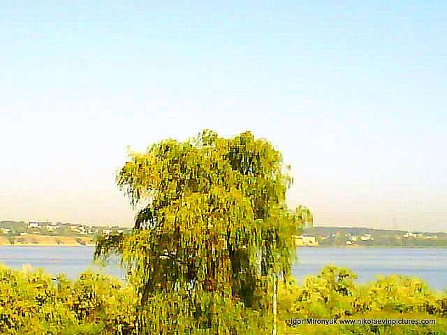 Зелёная ива