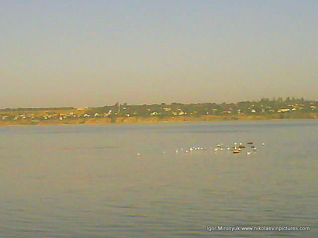 Чайки на воде, село на том берегу.