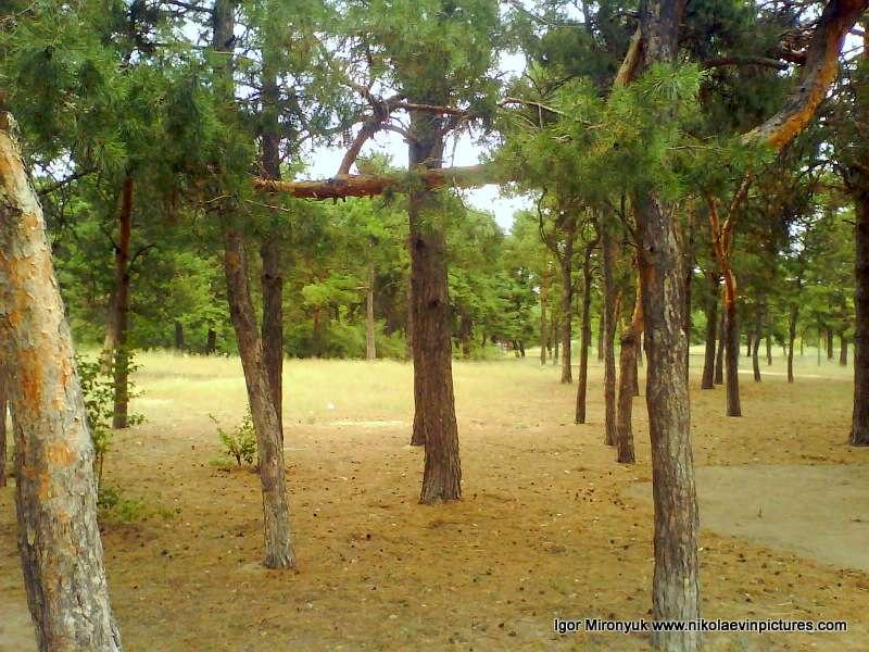 Песочный парк (парк Лески)