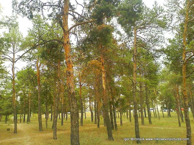 парк Лески