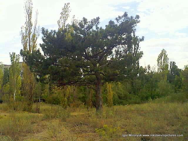 Дерево недалеко от пересохшего озера